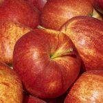 りんごは世界にどんな品種があるのか?