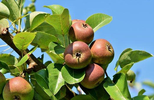 りんご 果汁 しみ 取り方