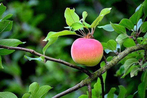 りんご 糖分 血糖値 影響
