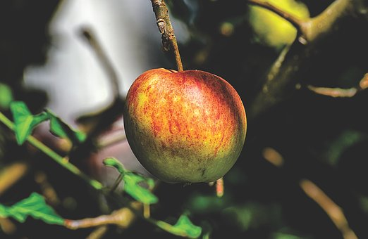 りんご  カリウム 塩分