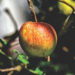 空腹時の胃痛がりんごを食べると治る!胃痛の原因との関係は?