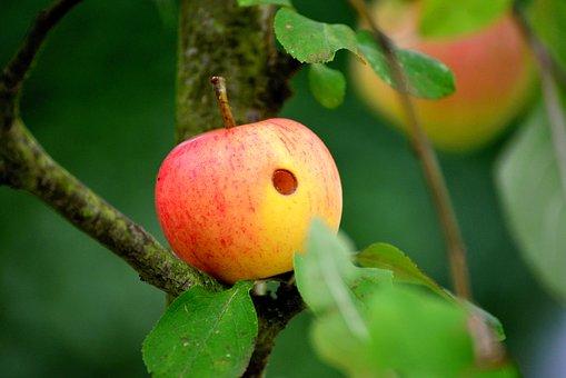 リンゴ           花           構造