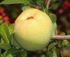 りんご 農薬 種類 洗い方 理由