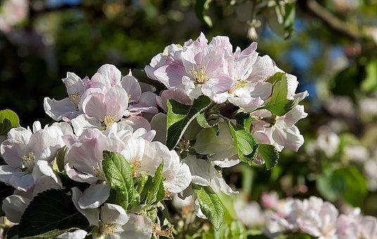 離乳食 りんご 冷凍保存 方法 保存期間 栄養価