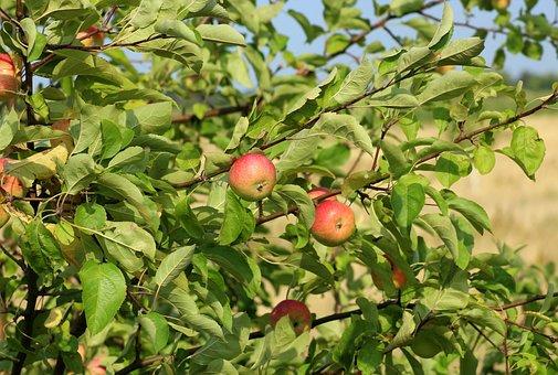 りんご           相性       食材
