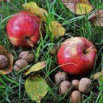 りんごで肉が柔らかくなる理由とは?