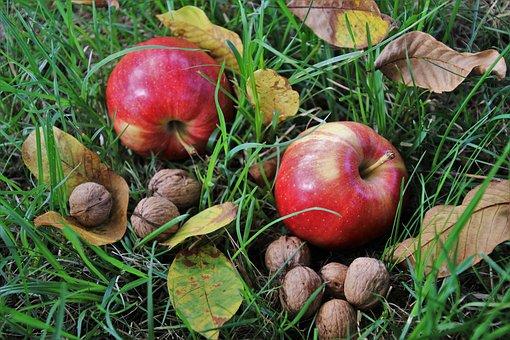 りんご           肉           柔らかく              理由