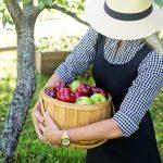 りんごのサビ果病、もさもさや日焼けの原因とは?