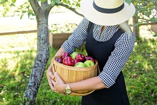 りんご           サビ果    もさもさ    日焼け    原因