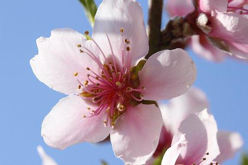 桃 接木 時期 台木