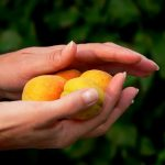 桃の産毛が、痛い、かゆい、その理由と対策について