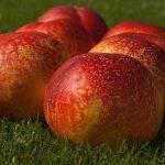 桃の輸出の統計と課題