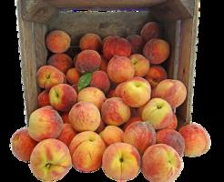 桃 人気 品種 産地