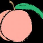 桃に袋をかぶせる理由は?種類の違いとは