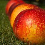 桃の葉っぱに赤い斑点があるのは赤星病の言う病気が原因?