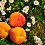 桃に使用する農薬の種類は?散布の時期とは