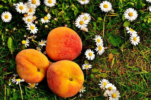 桃 農薬 種類 時期