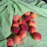 海外からやってきた品種の桃「ネクタリン」について