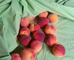 桃 品種 海外