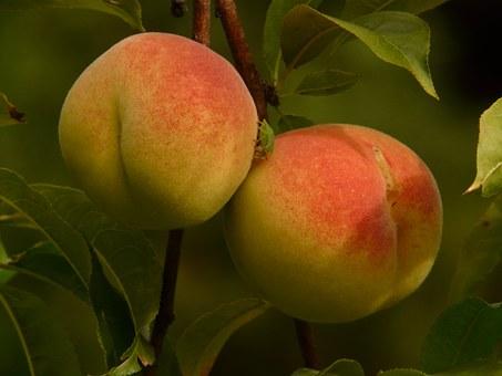 桃 甘い 部位