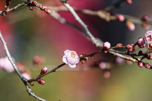 桃 剥き方 種 取り方
