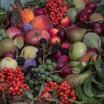 桃の挿し木の時期とは?人工受粉の方法は?