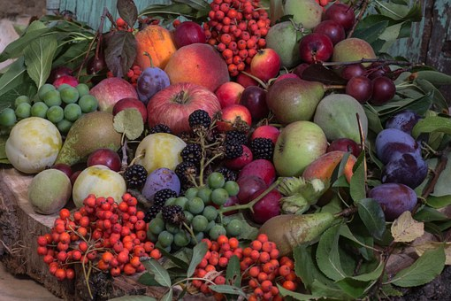 桃 挿し木 受粉 方法 時期