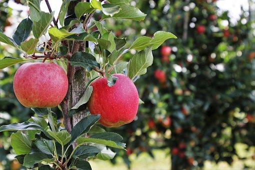 りんご           体           温める