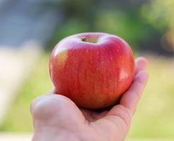 木 数 りんご 収穫