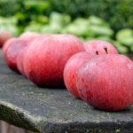 リンゴを使った追熟と期間について