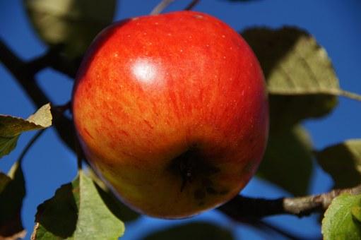 りんご 皮 消化 悪い 栄養