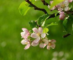 りんご 枝 名前 剪定作業