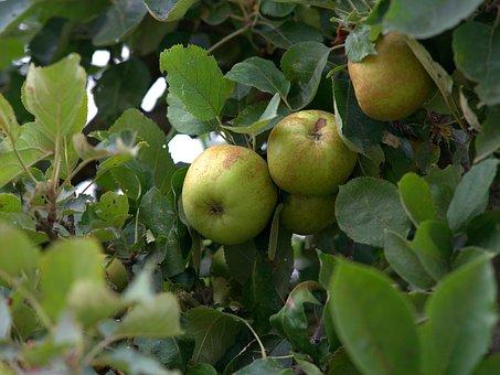 リンゴ 袋 種類 作り方