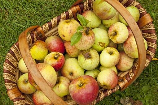 リンゴ すりおろし 酵素