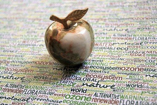 リンゴ 苗木 植え付け 方法