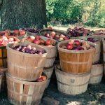 リンゴの皮を包丁でむく際の包丁の持ち方は?