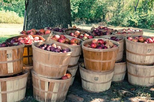 リンゴ 皮 包丁 持ち方