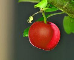 りんご 枝 病気 腐らん病 カビ 原因