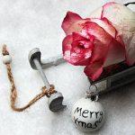 クリスマスローズ ハイブリッドの育て方や手入れ方法とは?